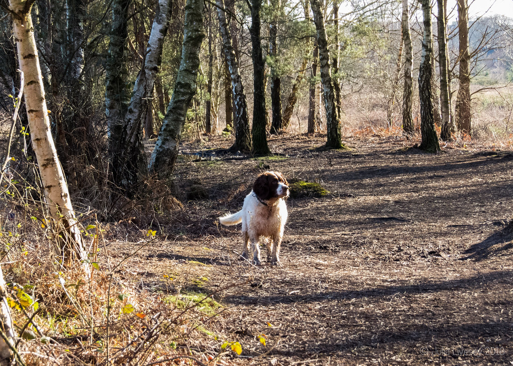 Max in the silver birch grove