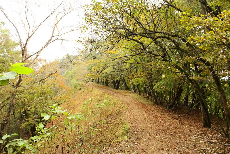 20101023-川苔山-0087.jpg