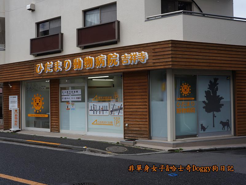 日本東京吉祥寺牛肉丸&satou牛排12
