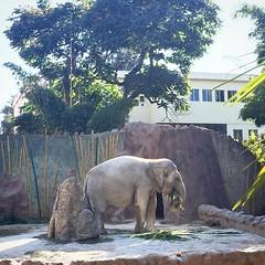 ¡La hora de la champurrada ha llegado ya! #fridayfunday #zoo #elefante #elephant #foodlover #foodie