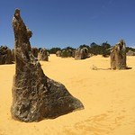 The Pinnacles of Western Australia. Like staring at a Dali painting. Mysterious limestone formations. Speculation runs between remnants of ancient petrified vegetation and an over abundance of nutrients delivered to plant root systems at the surface.