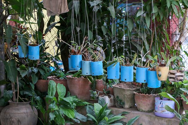 Nice display of foliage plants, Luang Prabang, Laos ルアンパバーン、民家の庭のオシャレなディスプレイ