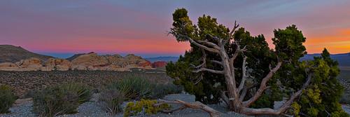 redrockcanyon sunset sky usa sun nature america landscape march spring lasvegas earth nevada nat places mojavedesert 2016 junipertree canon5dmarkiii canonef1635mmf4lisusmlens
