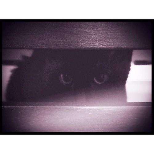February 25 - Peek-a-boo