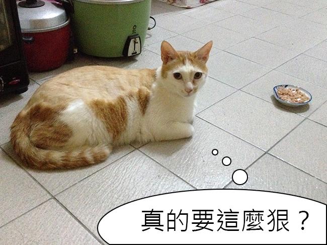 家裡來了一隻貓 強迫貓咪細嚼慢嚥