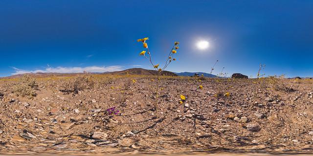 "Death Valley ""Super Bloom"" 2016 in #VR."
