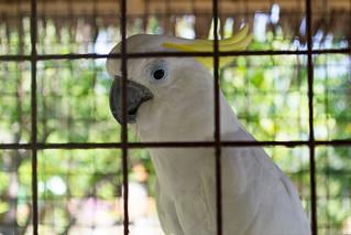 Image of Bakhawan Ecopark. bird philippines parrot mangrove kalibo bakhawanecopark westernvisayas