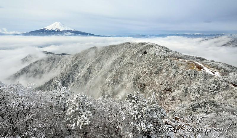 雲上の白樹