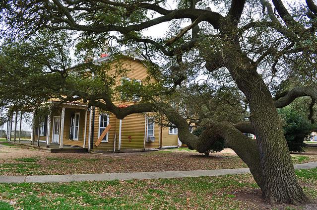 Fort Monroe, Live Oak (Quercus virginiana) (6)