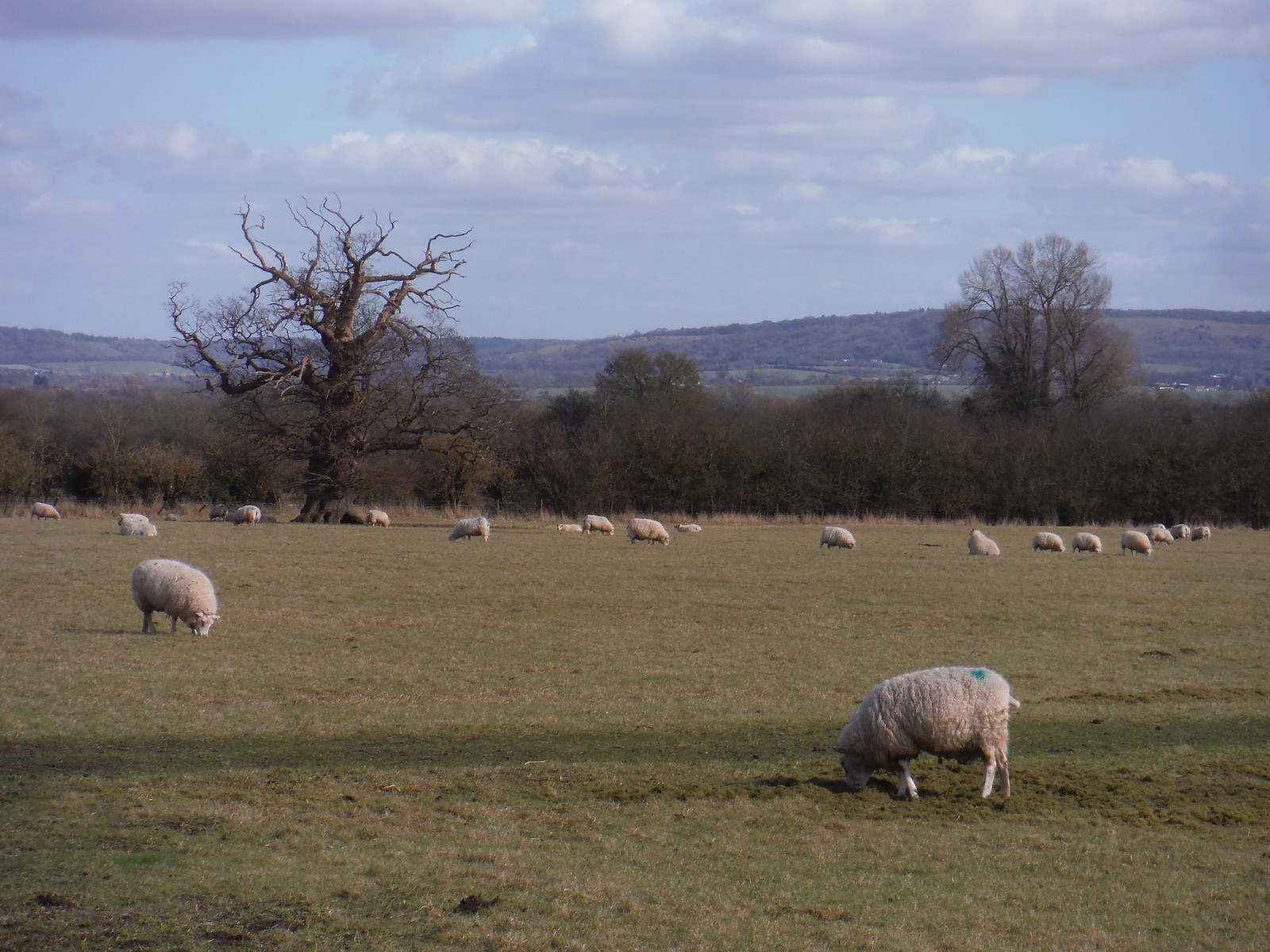 Chiltern Views, from field in Dinton SWC Walk 193 Haddenham to Aylesbury (via Gibraltar and Ford)