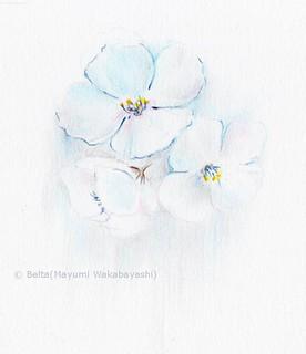 2016_04_19_whiteflower_01_s