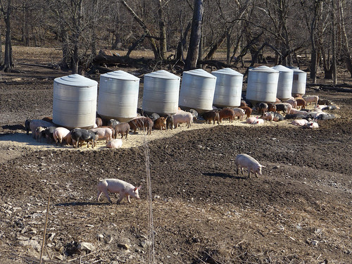 2015-11-23 - Found a Pig Farm - 0003 [flickr]