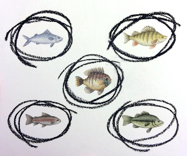 fish scribble pattern