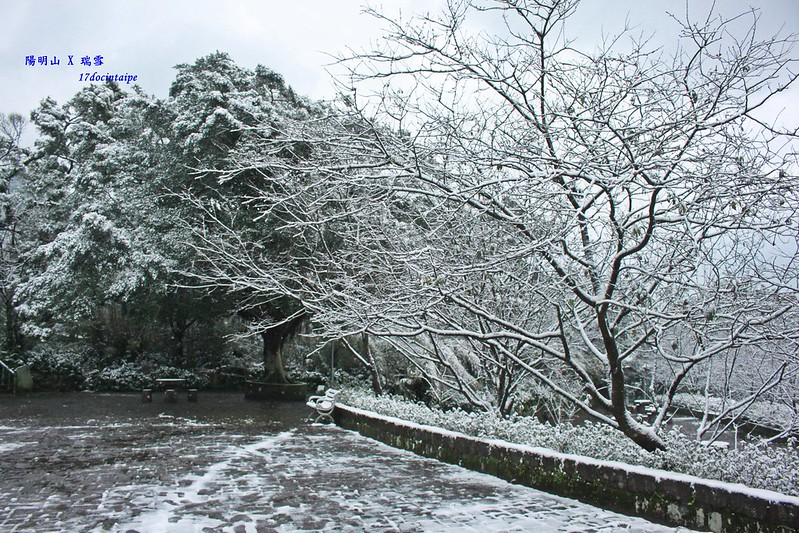 2016-台北陽明山-瑞雪-難得一見的雪白山景-17度C隨拍 (106)