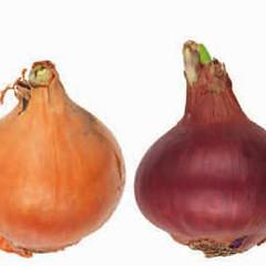 onions-0098