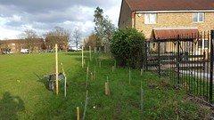 Woodland Trust trees and shrubs planted at Mountsfield Park