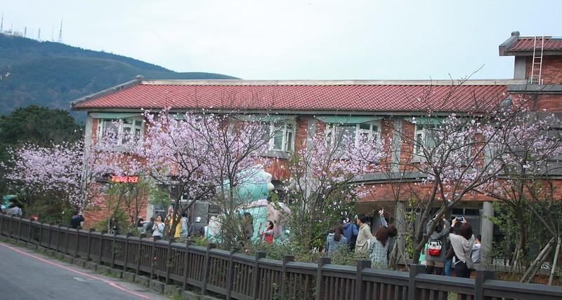 竹子湖採海芋-17度C隨拍 (97)