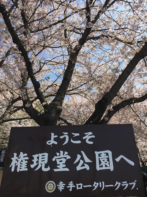 20150406 権現堂公園@日本埼玉県幸手市