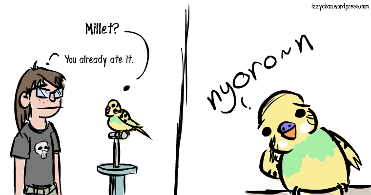 millet you already ate it budgie