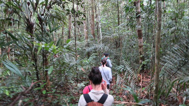 trekking into the amazon rainforest from tupana lodge