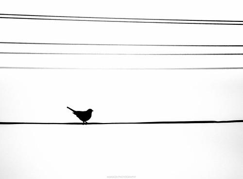 Silhouette // 19 03 16