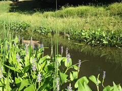 Example of a completed wet pond upgrade