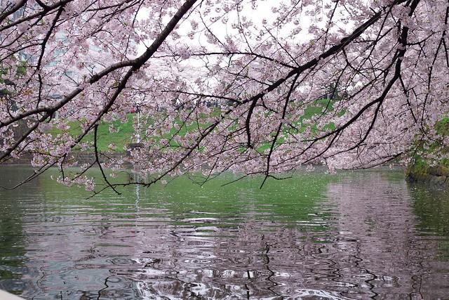 2016/04/03千鳥ヶ淵-33