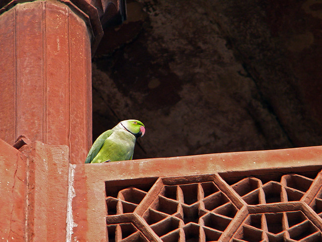 A green parrot on the red stone lattice railing of the mosque at the Taj Mahal in Agra, India