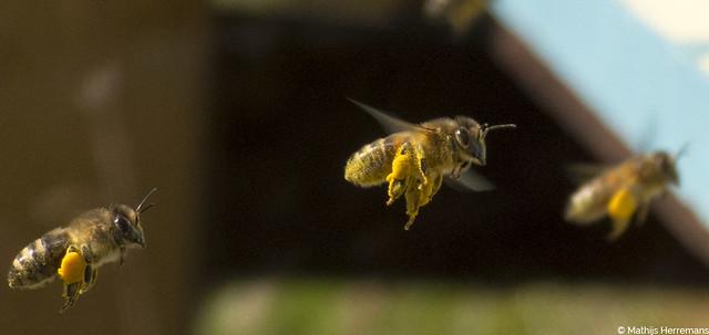Voorjaarsinspectie bij de bijenvolken