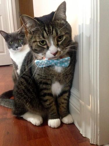 Watson in a bow tie