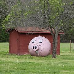 Propane Piggy