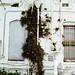 weeds and whitewash