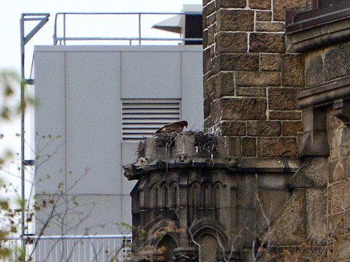 Cathedral Hawk Nest - 7663