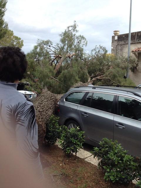 albero caduto rutigliano 3