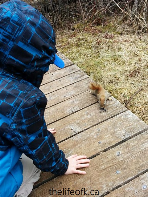 JackPineTrail_squirrel