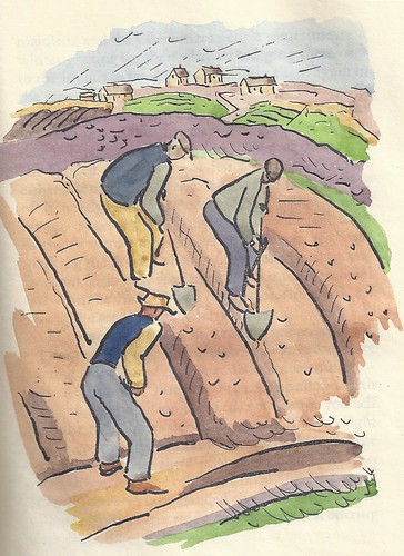 Illustration from Stranger in Aran showing men digging in a field.