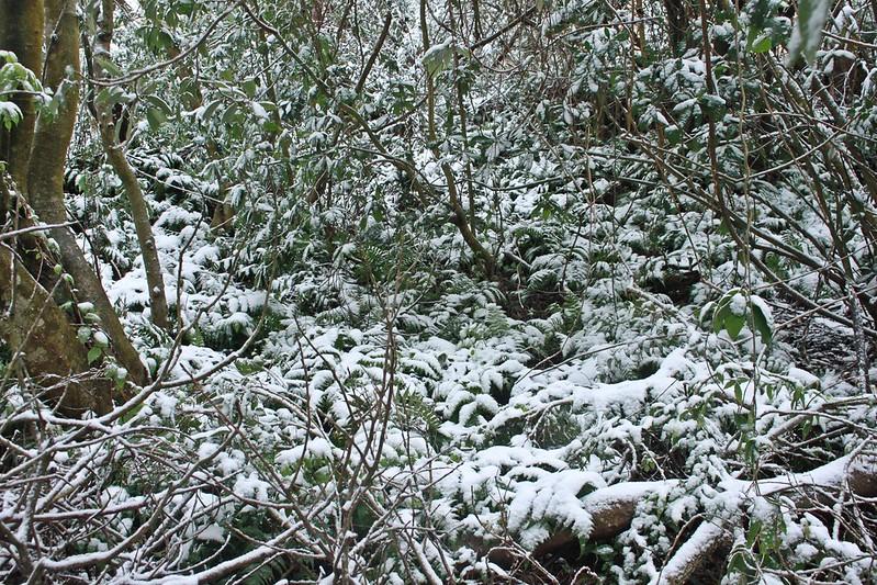 2016-台北陽明山-瑞雪-難得一見的雪白山景-17度C隨拍 (152)
