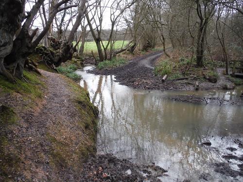 Ermine Street Roman Road fording Spittal Brook, Hoddesdonpark Wood
