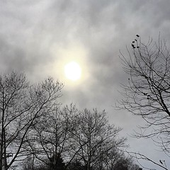 Winter storm January 2016