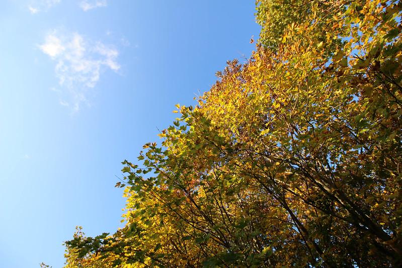 2014-09-28_00070_栗駒山.jpg