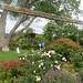 Trinity Farm Roses