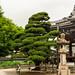 Otani Honbyo and Tree by fate atc