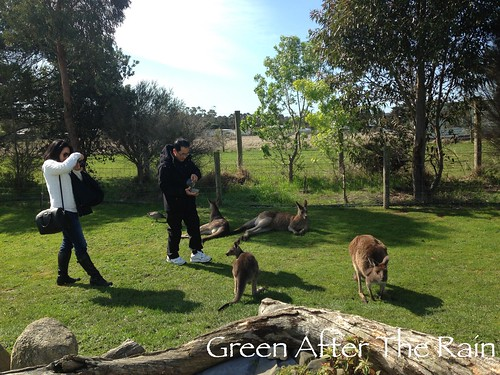 150911g Phillip Island Maru Koala and Animal Park _39_TH