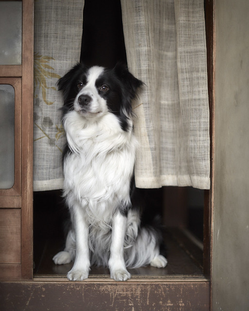Sitting dog.