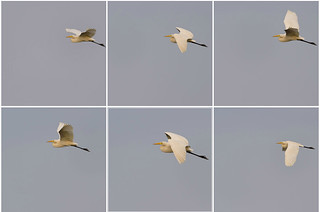 EGRET Collage