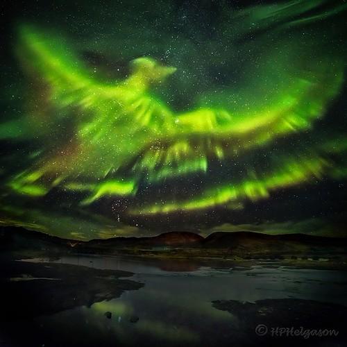 Ave Fénix - Aurora