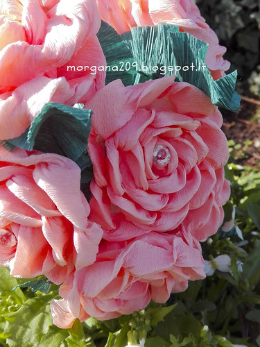 RosefestaDonna_03w
