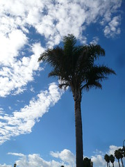 Palm tree near dogmatic