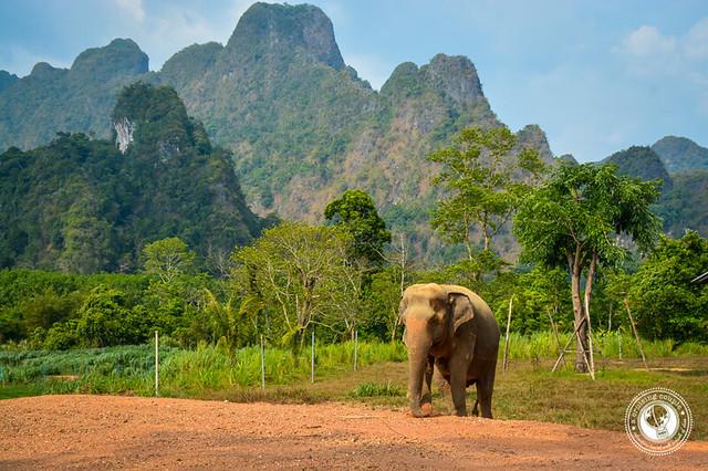 Elephant Hills Elephant Camp