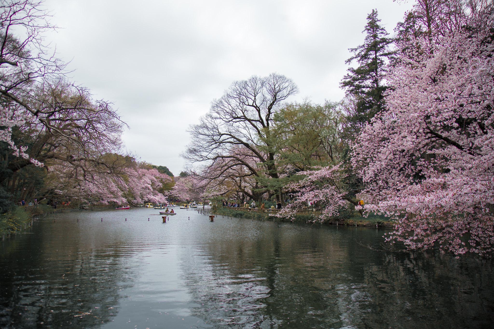 2016-04-01 井の頭公園 001-6